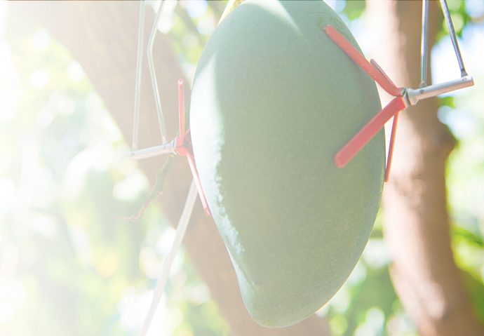 Fruit Increament Sensor
